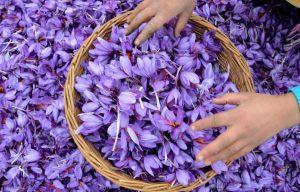saffron - Saffron: Why Iran's 'Red Gold' Is So Prized  - Blog