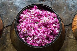 rosewater - Hidden pink gems on the central Iranian desert  - Rosewater Articles