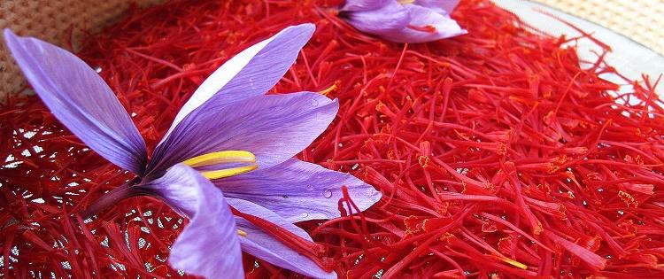 saffron - Amazing Benefits Of Saffron