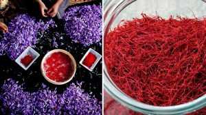 saffron - Iran's saffron exports hit 10-year high