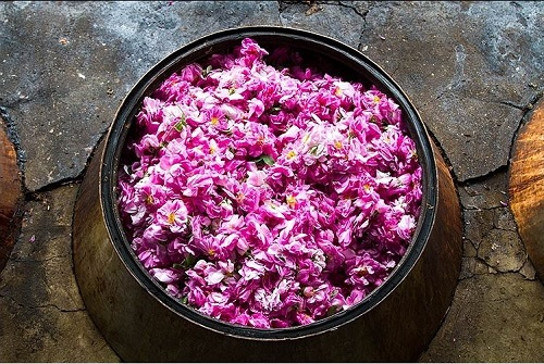 iranian rosewater rosewater - THE WORLD'S BEST ROSEWATER COMES FROM IRAN