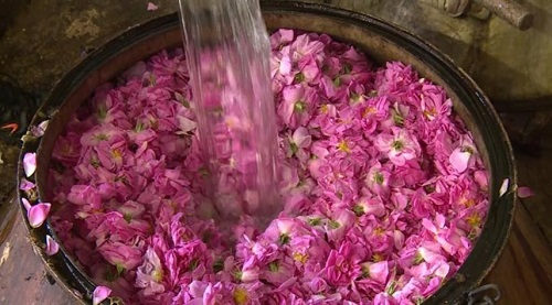 rosewater iran rosewater - THE WORLD'S BEST ROSEWATER COMES FROM IRAN