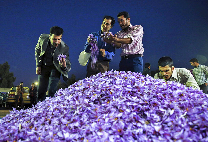 saffron - Iranian Saffron to be Smuggled by U.S. Sanctions