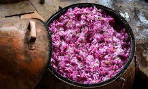 rosewater - Iran Meets 90% of Global Rosewater Demand  - Blog